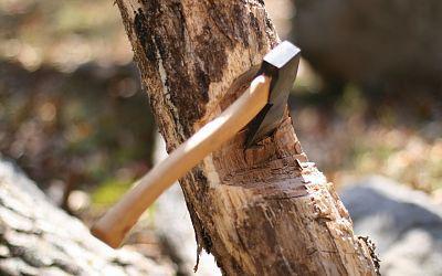 Гражданин области нарубил леса на11 млн руб. 0+