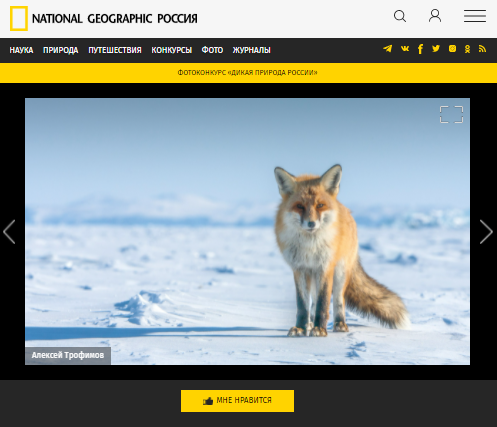 <p>Скриншот с сайтаNational Geographic</p>